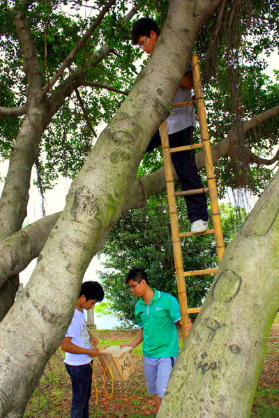 9.	Putting up nest boxed. In tree: Chao He. On right on ground: Ming Li. On left: Biao Li.